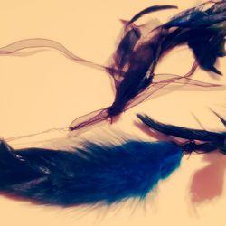 羽根かざり