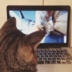 猫動画を見る猫